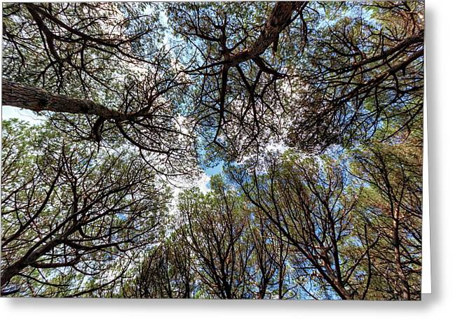 Pinewood Forest, Cecina, Tuscany, Italy Greeting Card