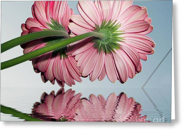 Pink Gerbers Greeting Card by Elvira Ladocki