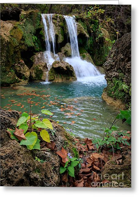 Price Falls In Autumn Color.  Greeting Card