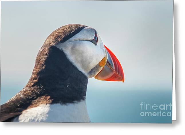 Greeting Card featuring the photograph Puffin In Close Up by Patricia Hofmeester