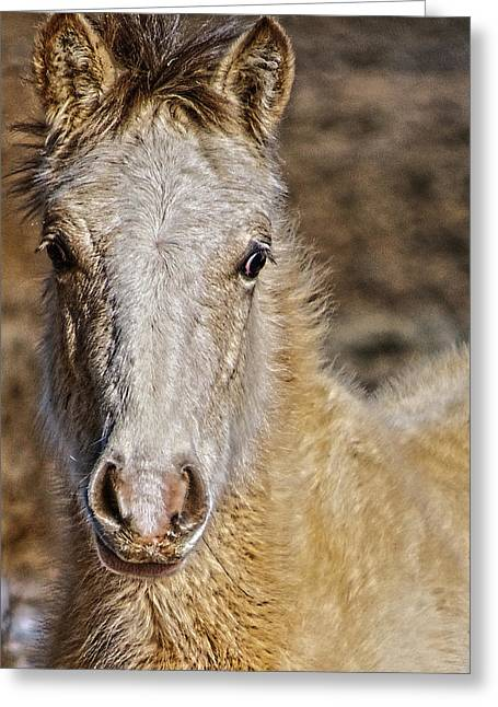 Red Willow Pony Greeting Card by Charles Muhle