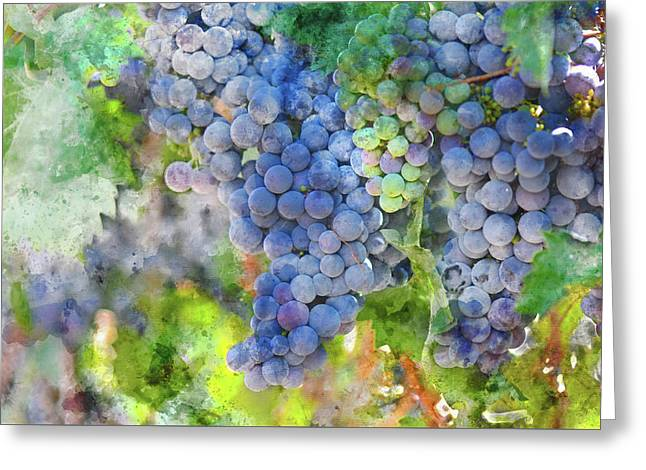 Red Wine Grapes On The Vine Greeting Card