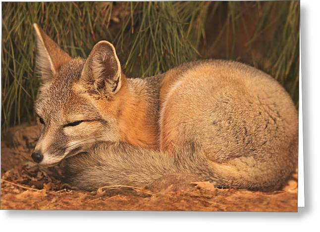 San Joaquin Kit Fox  Greeting Card