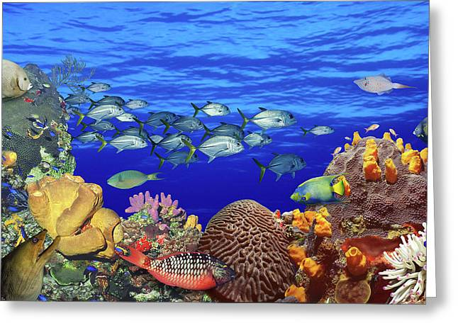 School Of Fish Swimming Near A Reef Greeting Card
