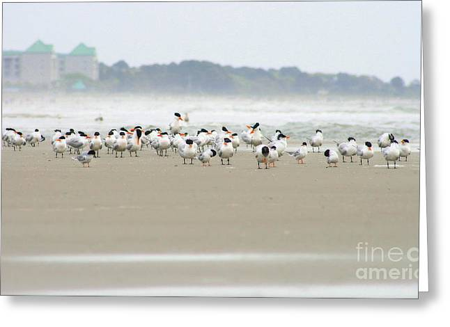 Seabirds On Hilton Head Shoreline Greeting Card by Angela Rath