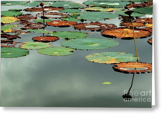 Spring Lake Fish And Wildlife Area - Water Lilies - Nymphaeaceae Greeting Card