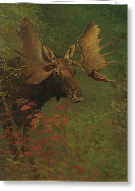 Study Of A Moose Greeting Card by Albert Bierstadt