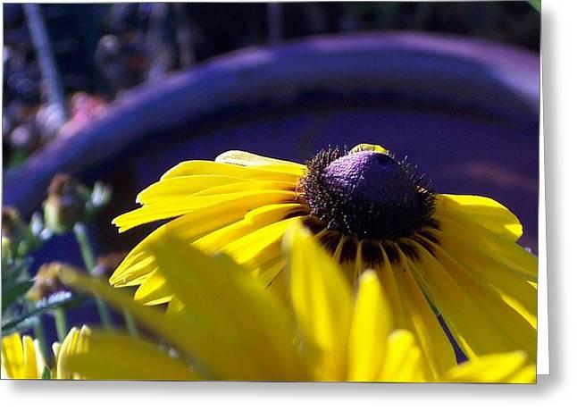 Sun Glory Series Greeting Card by Marika Evanson