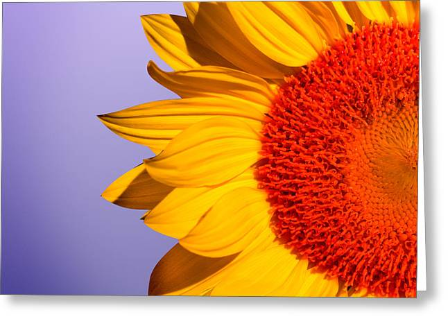 Sunflowers Greeting Card by Mark Ashkenazi