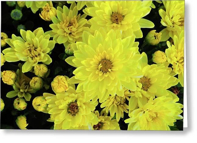 Sunshine Smiles Greeting Card by JAMART Photography