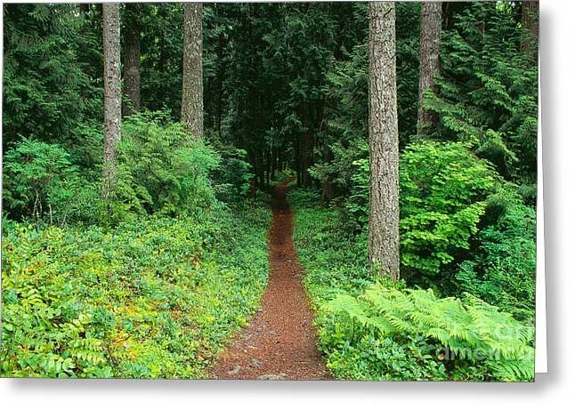 View Of Oregon Greeting Card by Greg Vaughn - Printscapes