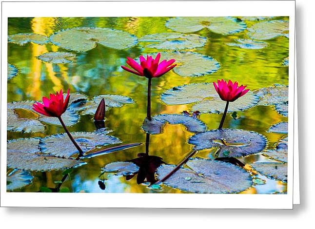 3 Water Lilys Greeting Card