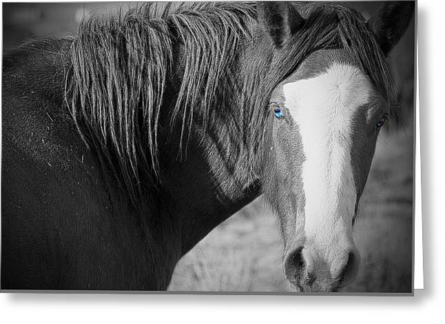 Wild Mustang Horse Greeting Card