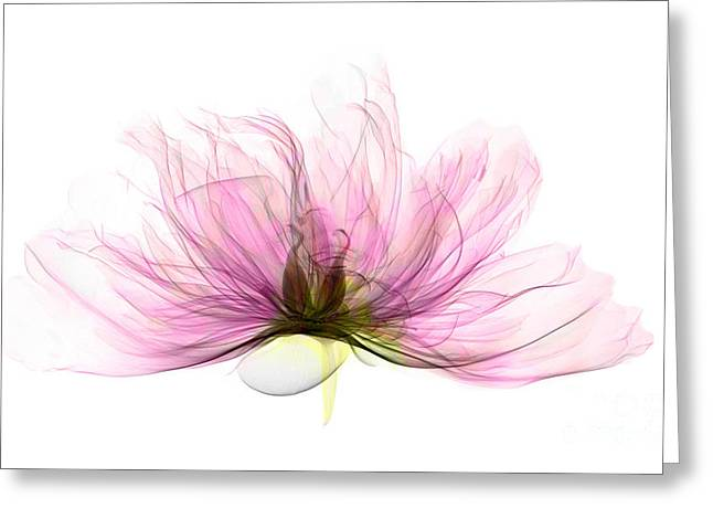 X-ray Of Peony Flower Greeting Card