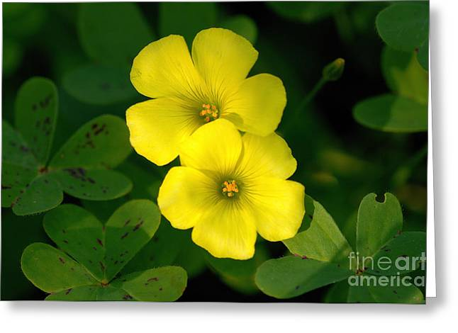 Flowers Greeting Card by Marc Bittan