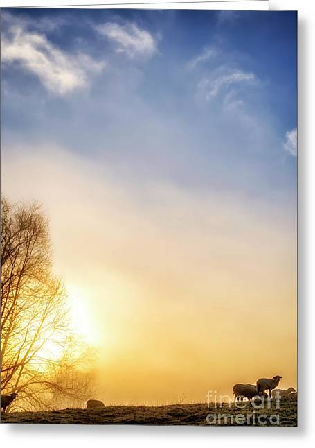 Greeting Card featuring the photograph Misty Mountain Sunrise by Thomas R Fletcher