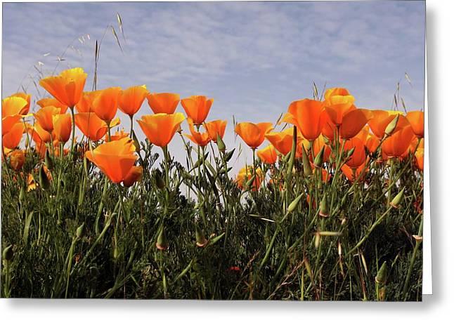 Flowers  Greeting Card by Luke Robertson