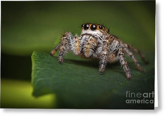 Jumping Spider Macro Greeting Card