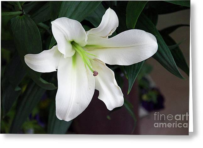 White Lily Greeting Card by Elvira Ladocki