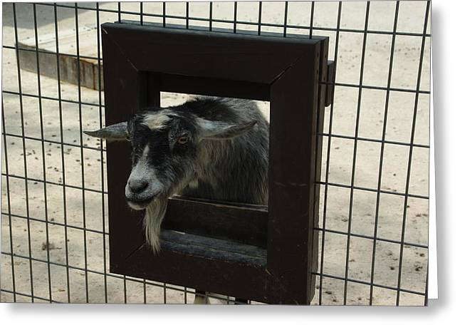3d Tv Goat 1 Greeting Card by Robyn Stacey
