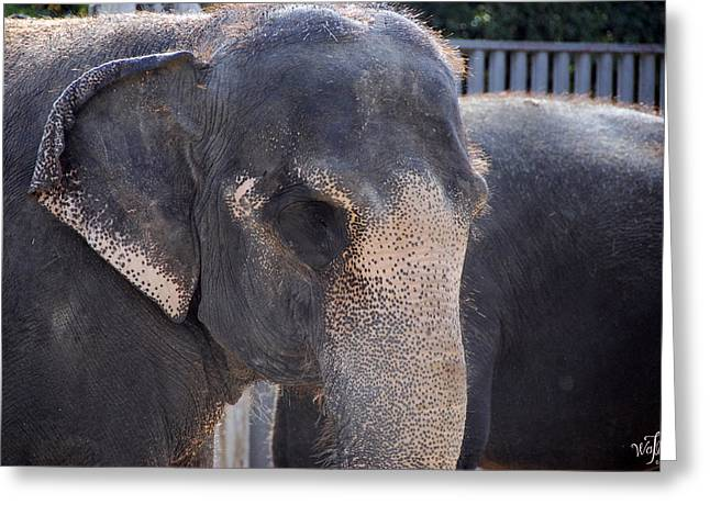 Asian Elephant Greeting Card by Thea Wolff