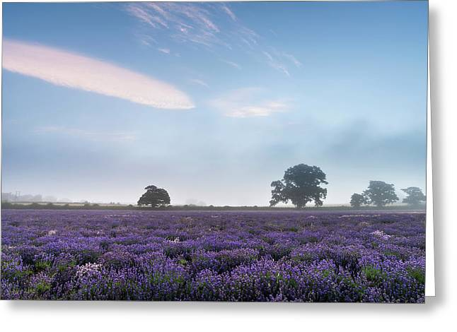 Beautiful Dramatic Misty Sunrise Landscape Over Lavender Field I Greeting Card