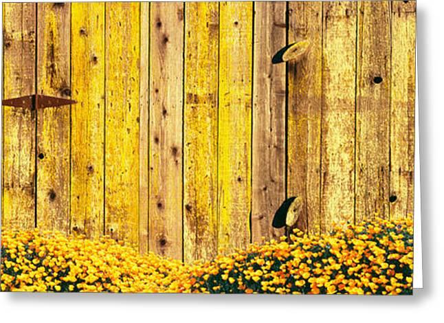 California Golden Poppies Eschscholzia Greeting Card