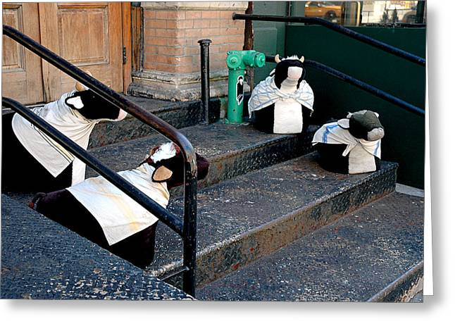 4 Cows On A Stoop Greeting Card by JoAnn Lense