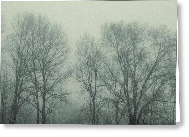 Dead Of Winter Greeting Card by JAMART Photography