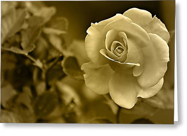 Floral Gold Collection Greeting Card by Marvin Blaine