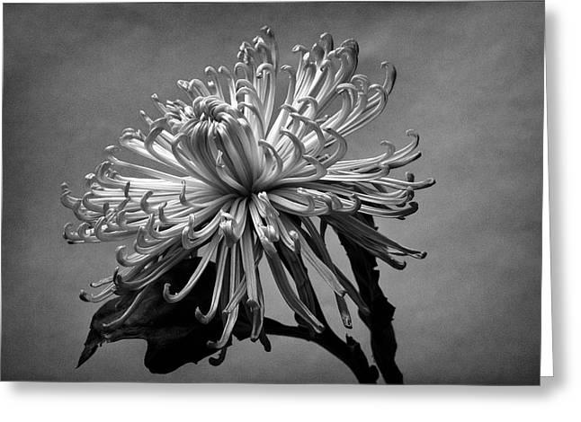 Floral Still Life Greeting Card by Robert Ullmann