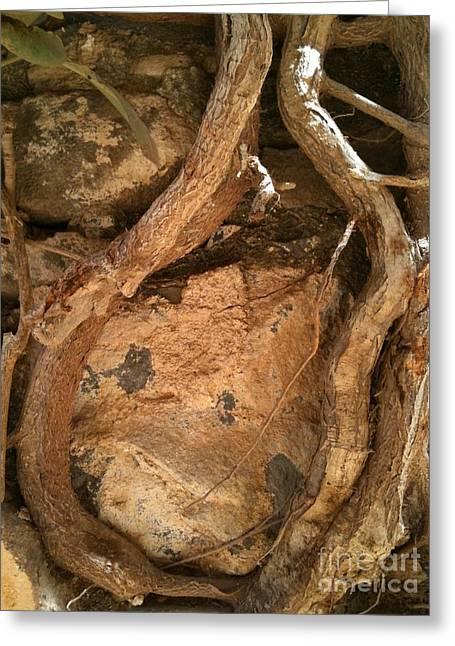 Goree Tree Texture Greeting Card