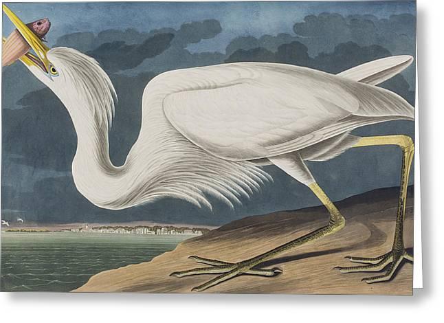 Great White Heron Greeting Card by John James Audubon