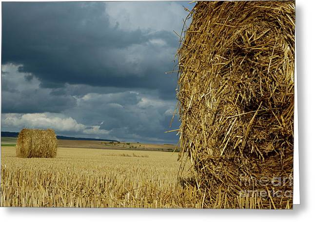 Hay Bales Greeting Cards - Hay bales in harvested corn field Greeting Card by Sami Sarkis