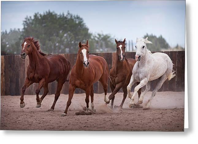 4 Horses Greeting Card