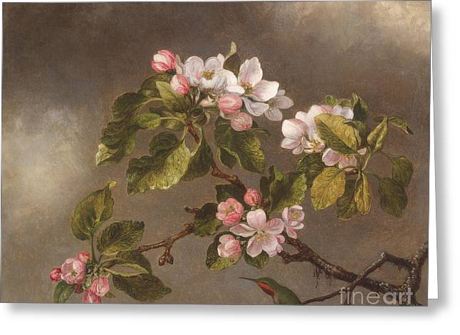 Hummingbird And Apple Blossoms Greeting Card by Martin Johnson Heade