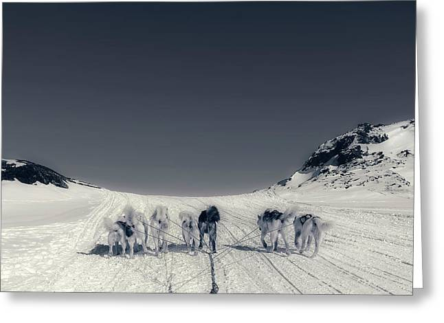 Huskies In Ilulissat, Greenland Greeting Card by Joana Kruse