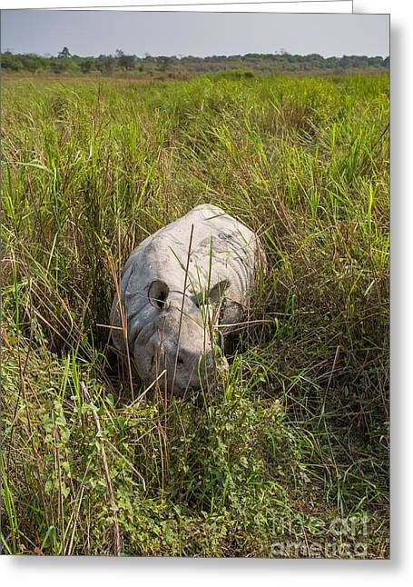 Indian Rhinoceros, India Greeting Card