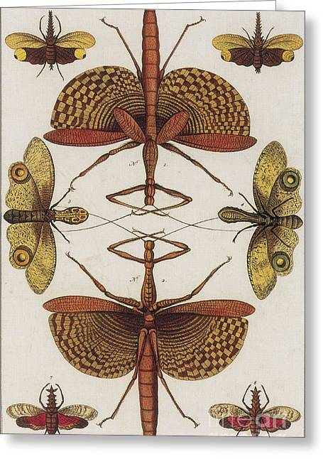 Insects, Sebas Thesaurus, 1734 Greeting Card by Science Source