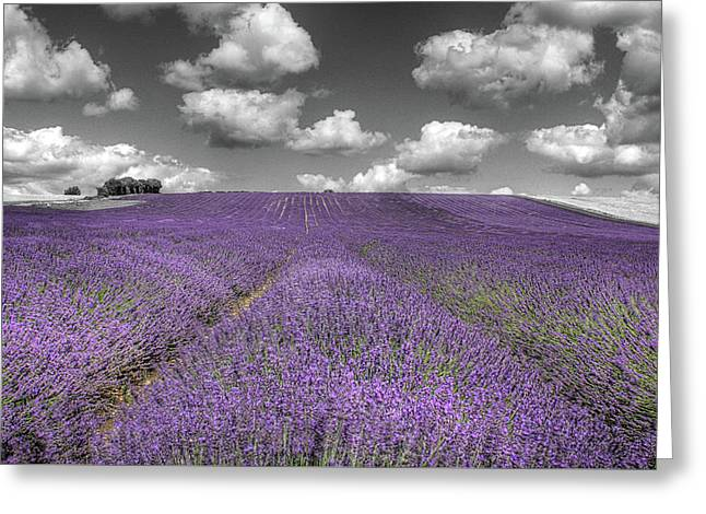 Lavender Field Greeting Card by Graham Custance