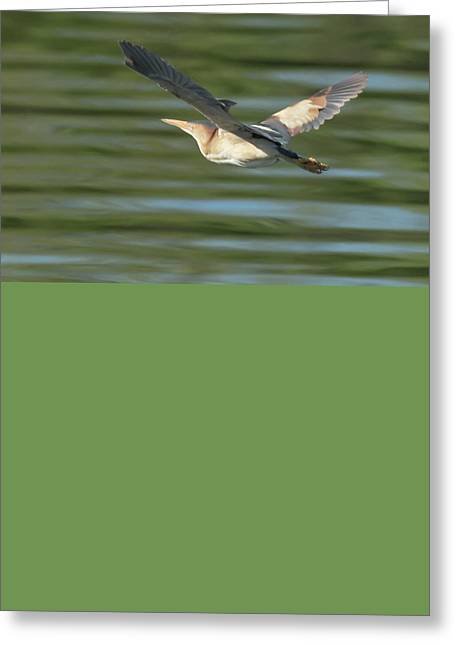 Least Bittern Greeting Card by Tam Ryan
