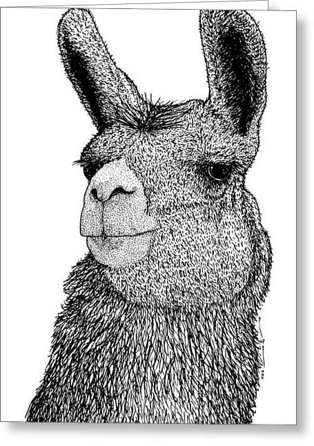 Llama Greeting Card by Karl Addison