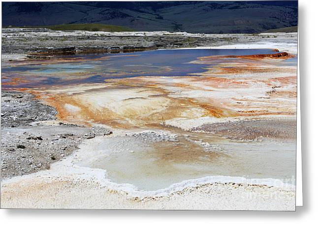 Mammoth Hot Springs Upper Terraces In Yellowstone National Park Greeting Card by Louise Heusinkveld