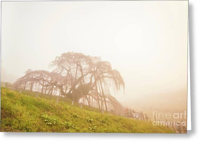 Greeting Card featuring the photograph Miharu Takizakura Weeping Cherry05 by Tatsuya Atarashi