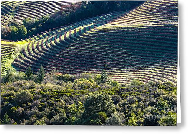 Napa Valley, California Greeting Card