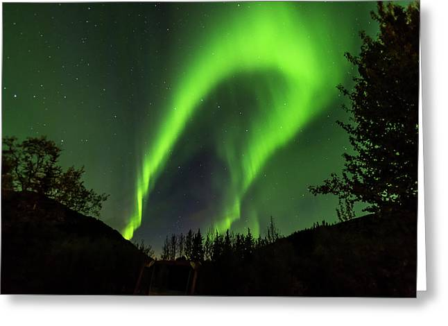 Northern Lights, Aurora Borealis At Kantishna Lodge In Denali National Park Greeting Card