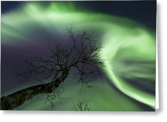 Northern Lights In The Arctic Greeting Card by Arild Heitmann