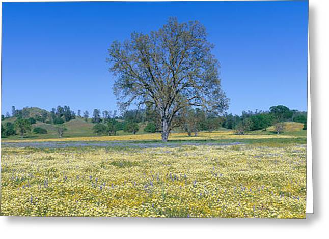 Panoramic View Of Spring Flowers Greeting Card by Panoramic Images