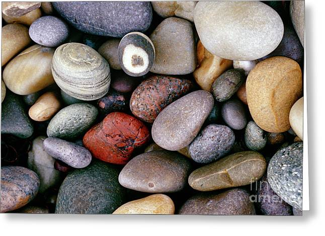 Pebbles Greeting Card by American School