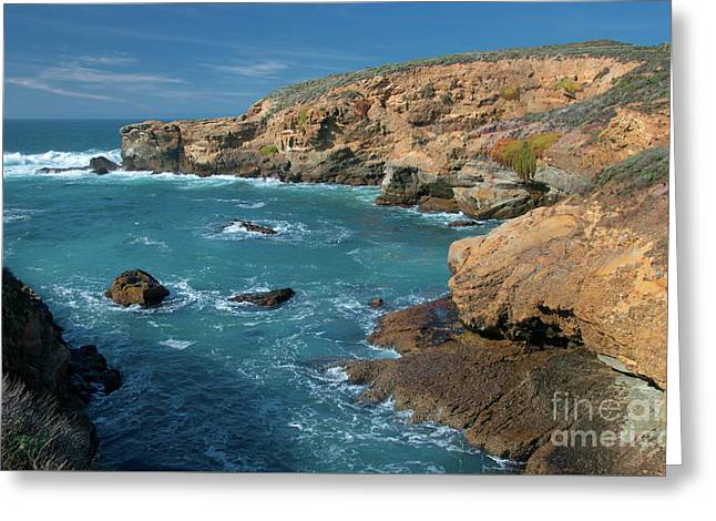Point Lobos Greeting Card by Glenn Franco Simmons